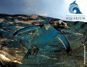 Utah Deal One Year Membership To Living Planet Aquarium